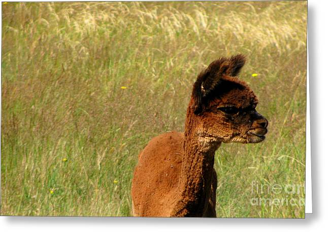 Baby Alpaca Greeting Card