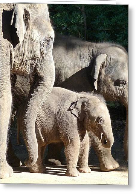 Baby Asian Elephant Socialising Greeting Card by Margaret Saheed