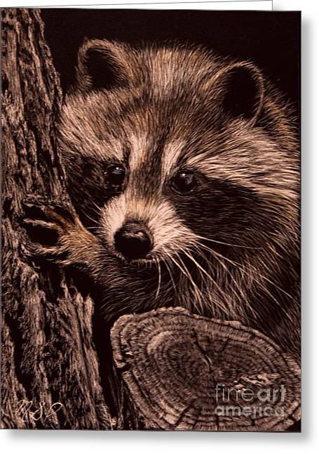 Baby Bandit Greeting Card