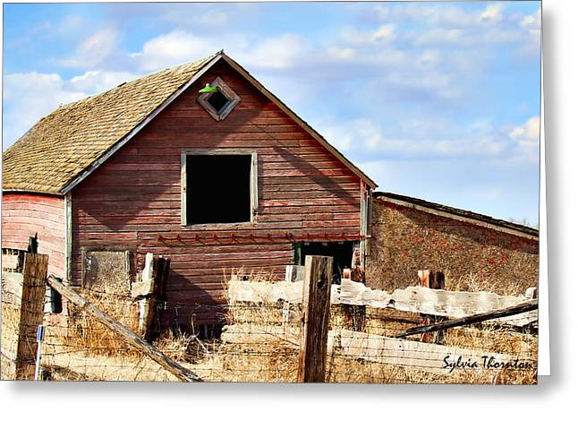 Greeting Card featuring the photograph Baby Barn by Sylvia Thornton