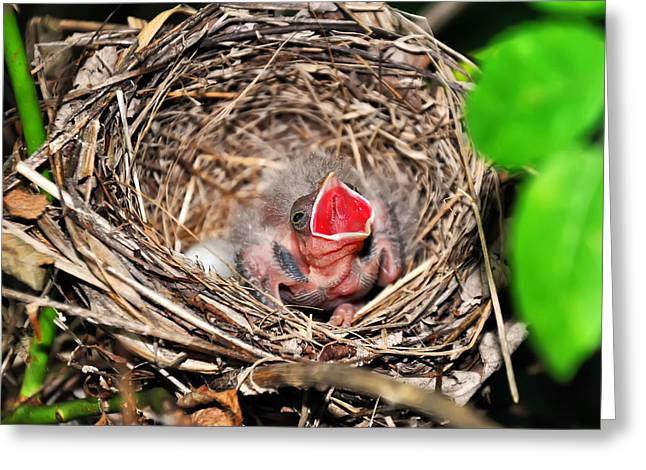 Baby Bird In Nest Greeting Card by Chris Flees
