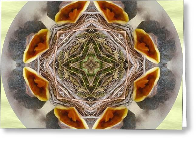 Baby Bird Kaleidoscope Greeting Card