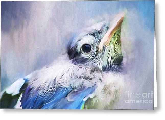Baby Blue Jay Greeting Card