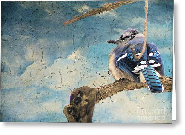 Baby Blue Jay In Winter Greeting Card