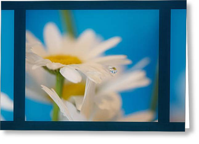 Baby Blue Triptych Greeting Card by Lisa Knechtel
