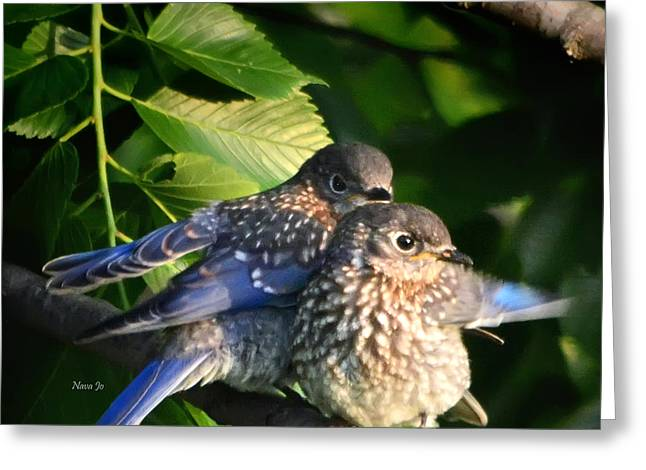 Baby Bluebirds 1 Greeting Card by Nava Thompson