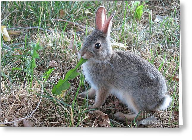 Baby Bunny Eating Dandelion #01 Greeting Card