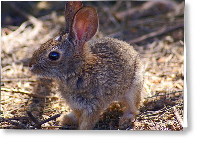 Baby Bunny Greeting Card by Heather Coen