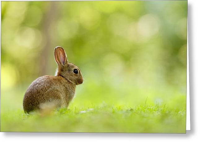 Baby Bunny In The Forest Greeting Card by Roeselien Raimond