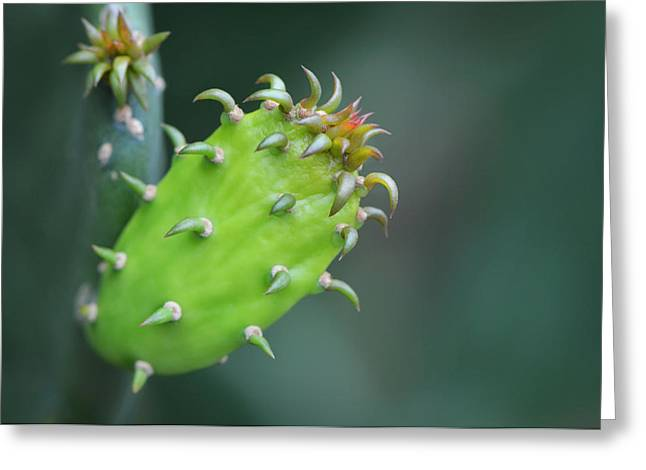 Baby Cactus - Macro Photography By Sharon Cummings Greeting Card