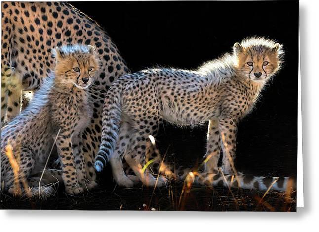 Baby Cheetahs Greeting Card