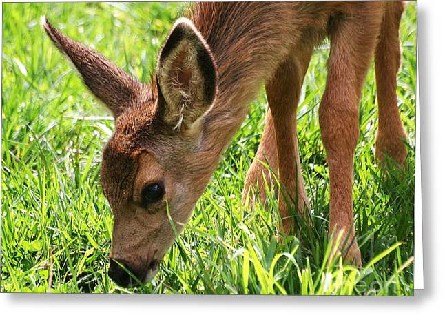 Baby Deer Greeting Card by Ronnie Glover