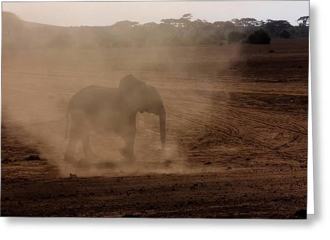 Greeting Card featuring the photograph Baby Elephant  by Amanda Stadther