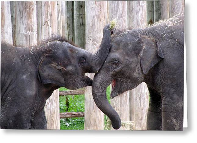 Baby Elephants - Bowie And Belle Greeting Card