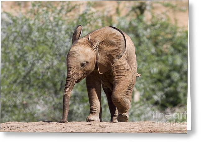 Baby Series Elephant Greeting Card