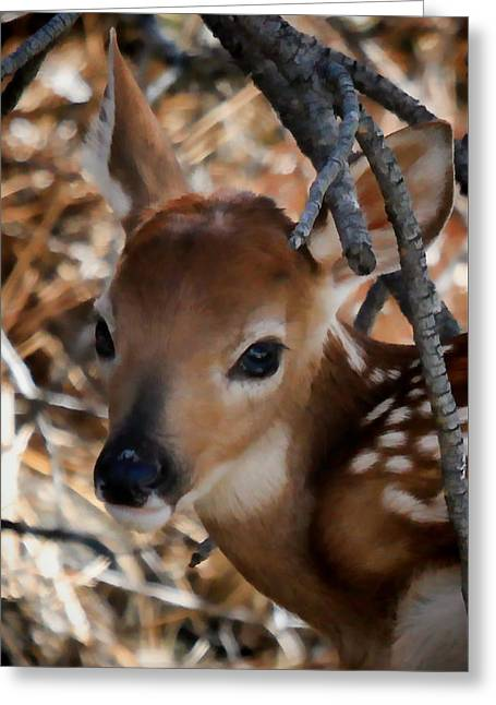 Baby Face Fawn Greeting Card
