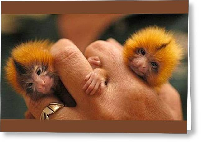 Baby Finger Monkeys Brown Border Greeting Card by L Brown