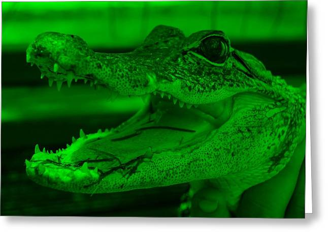 Baby Gator Green Greeting Card by Rob Hans