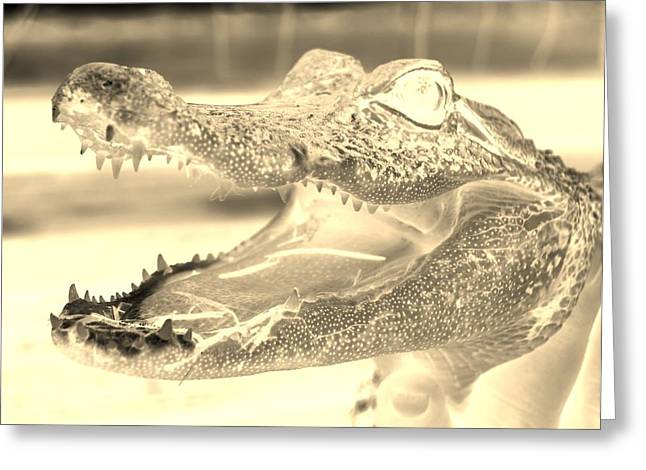 Baby Gator Neg Sepia Greeting Card by Rob Hans