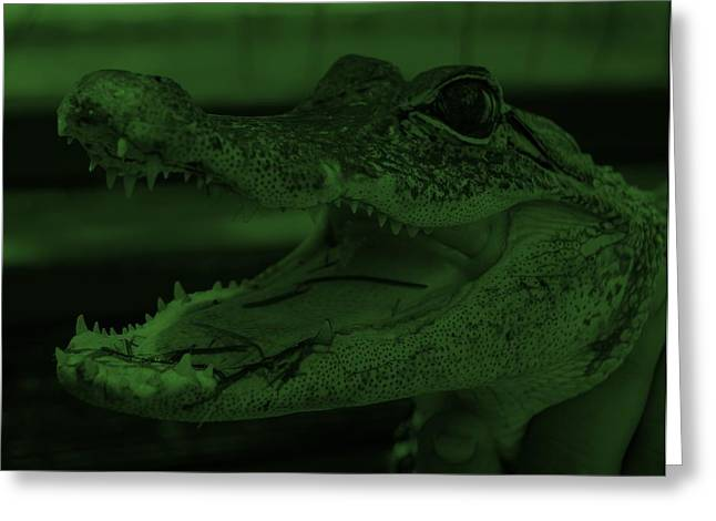 Baby Gator Olive Green Greeting Card by Rob Hans