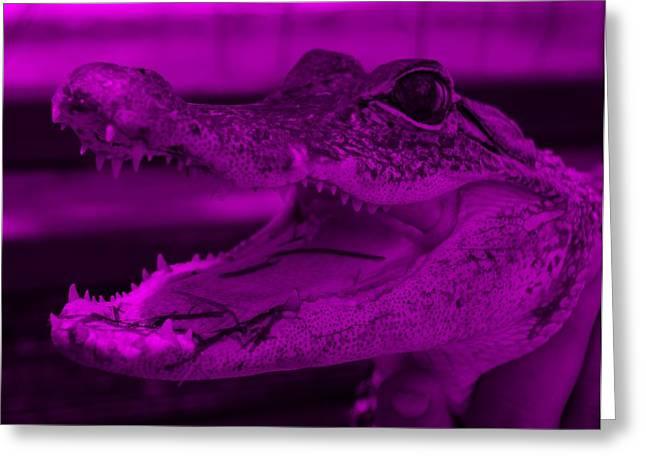 Baby Gator Purple Greeting Card by Rob Hans