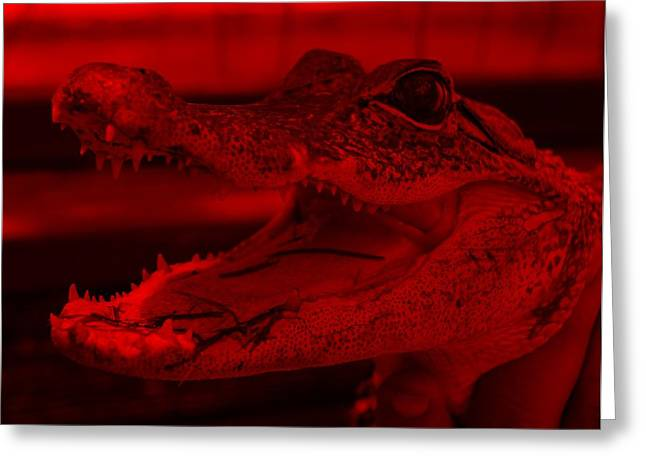 Baby Gator Red Greeting Card by Rob Hans