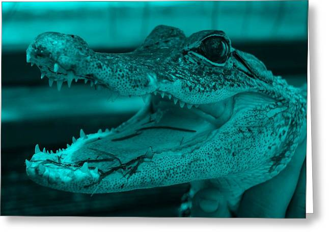 Baby Gator Turquoise Greeting Card by Rob Hans