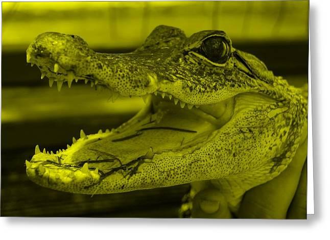 Baby Gator Yellow Greeting Card by Rob Hans