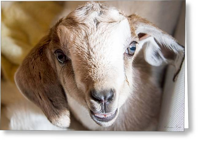 Baby Goat Face Greeting Card