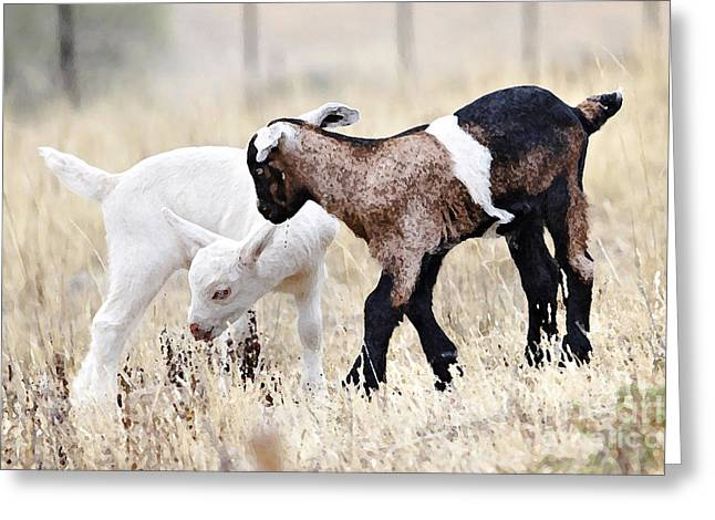 Baby Goats Painting Greeting Card