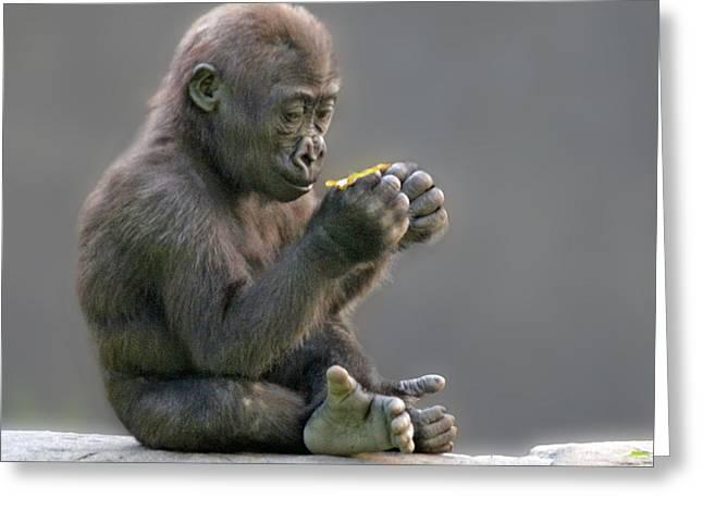 Baby Gorilla Examining A Weed Greeting Card by Jim Fitzpatrick