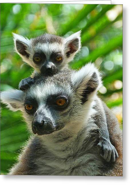 Baby Lemur Views The World Greeting Card by Margaret Saheed