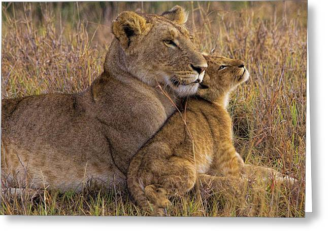 Baby Lion With Mother Greeting Card