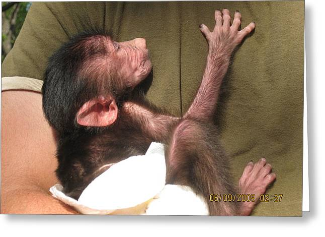 Baby Monkey Greeting Card by Dick Willis