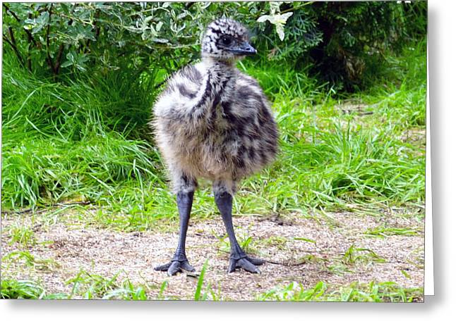 Baby Ostrich In The City Greeting Card by Ashley Fortier