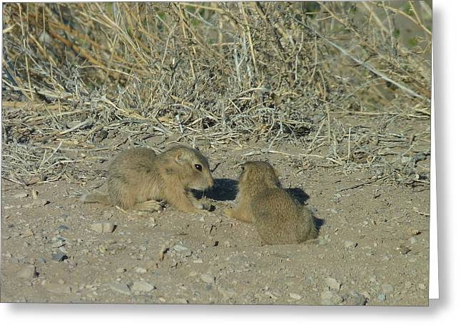 Baby Prairie Dog Greeting Card