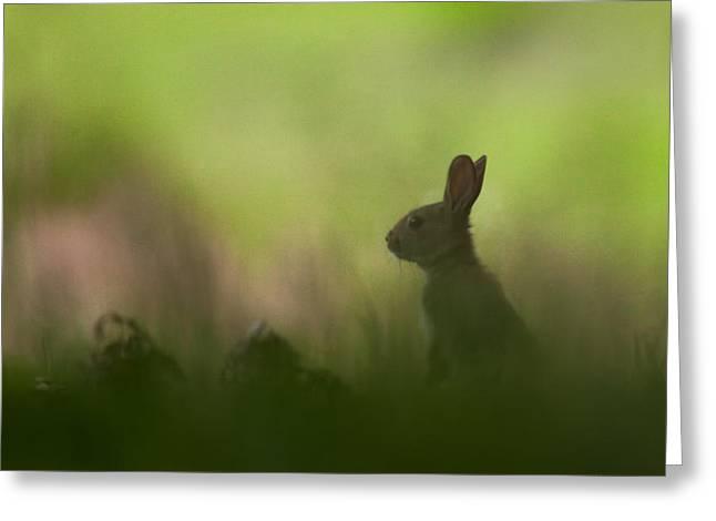 Baby Rabbit At Dusk Greeting Card