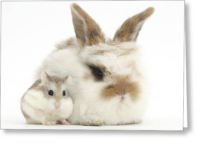 Baby Rabbit With Roborovski Hamster Greeting Card by Mark Taylor