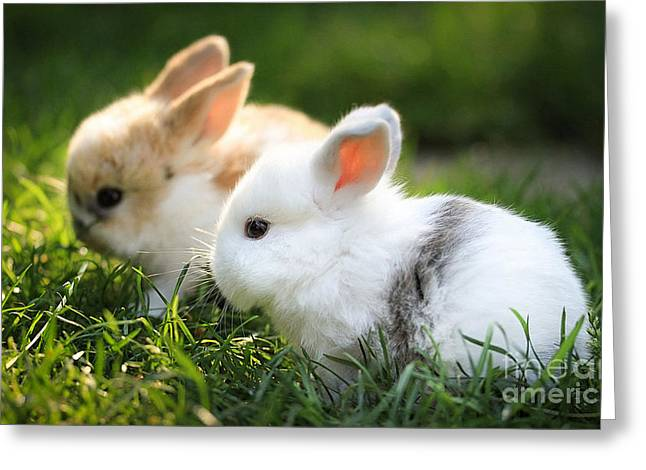 Baby Rabbits  Greeting Card by Marvin Blaine
