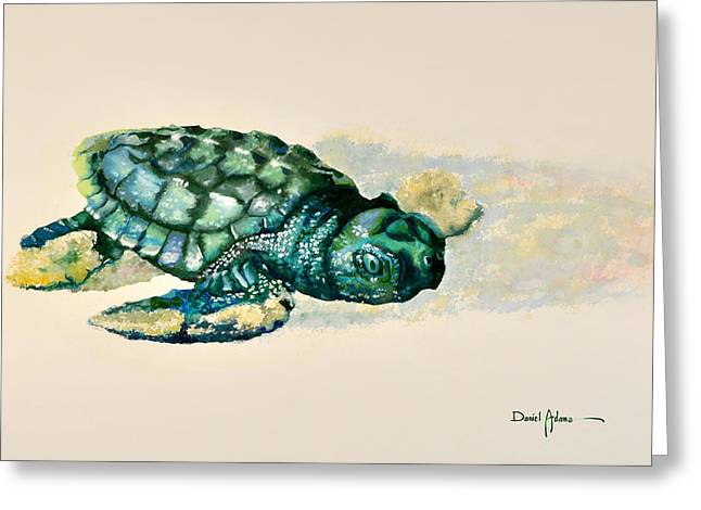 Da150 Baby Sea Turtle By Daniel Adams  Greeting Card