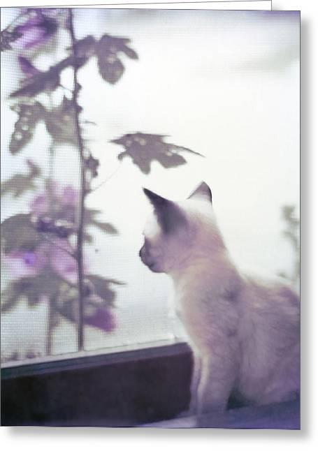 Baby Siamese Kitten Greeting Card