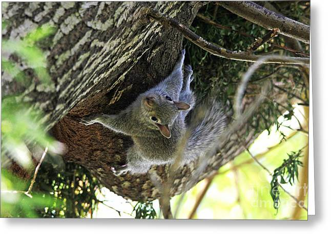 Greeting Card featuring the photograph Baby Squirrel On The Loose by Trina  Ansel