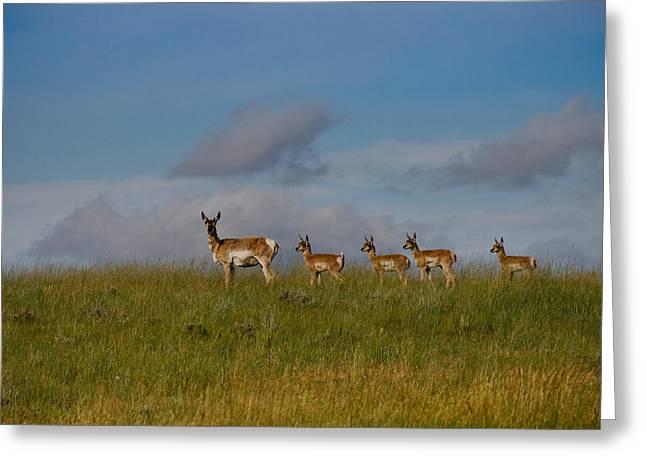 Babysitting - Antelope - Johnson County - Wyoming Greeting Card by Diane Mintle