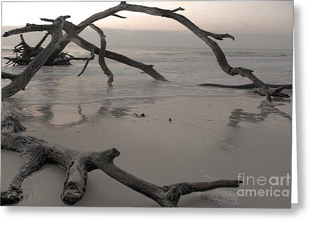 Greeting Card featuring the photograph Back From The Edge by Glenda Wright