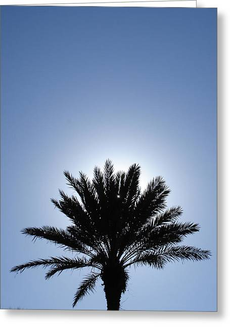 Back Light Palm Tree Greeting Card by Michel Mata