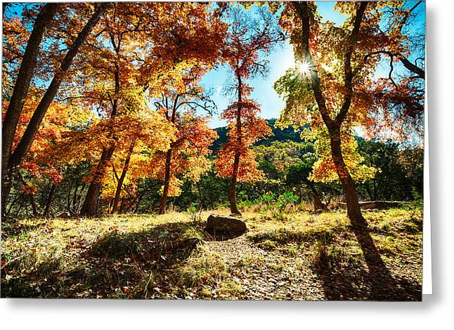 Backlit Wonderland - Lost Maples State Natural Area Texas Hill Country Greeting Card by Silvio Ligutti