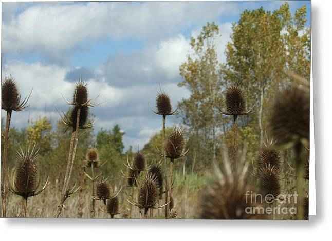 Greeting Card featuring the photograph Back To Nature by Deborah DeLaBarre