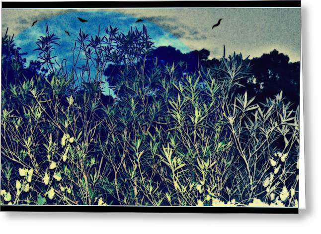 Back Yard Sky Greeting Card by YoMamaBird Rhonda