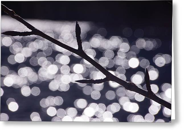 Backlit Branch Greeting Card