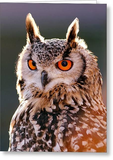 Backlit Eagle Owl Greeting Card